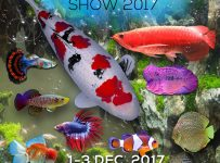Nusantara Aquatic (Nusatic) - Indonesia Convention Exhibition, 1-3 Desember 2017
